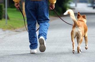 wandelen met de hond en afvallen