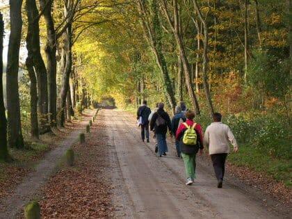 wandelen en afvallen