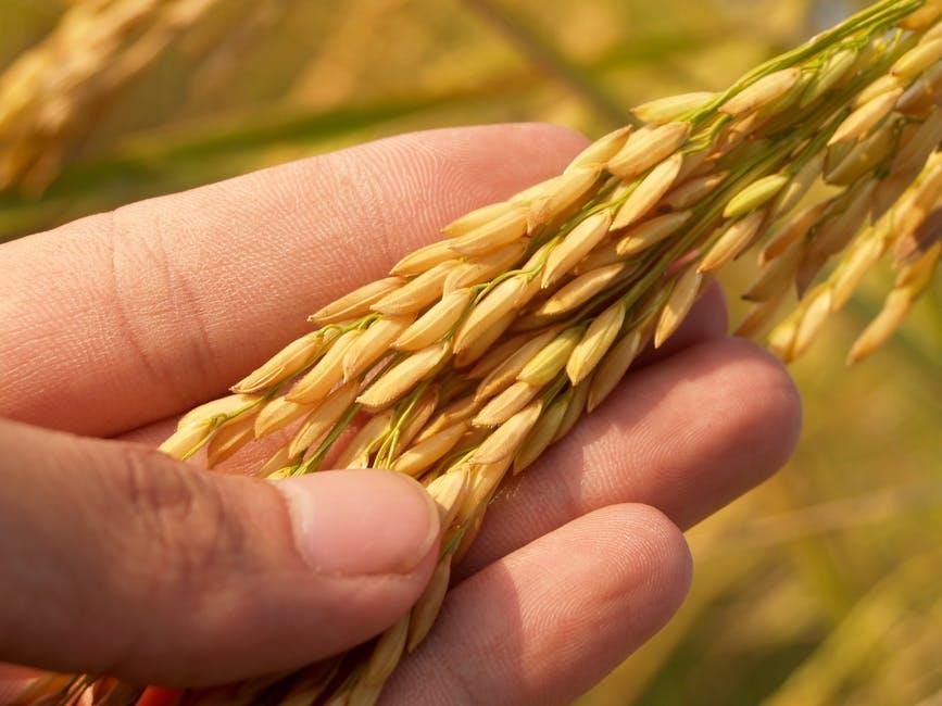 rijst als bron van eiwitten